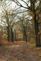 Beech lane - light by steppelandstock