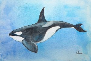 Orca by Lin-the-Wanderer