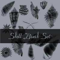Shell Brushes by Insan-Stock