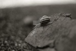 Snail away - dream your dream by Sr-Manolo