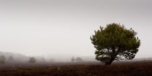 foggy Tree's I by NordicElk