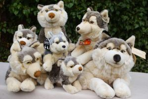 My collection of plush Wolves by Huskyplush