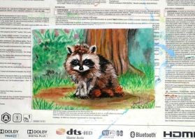 Baby Racoon by RinnG