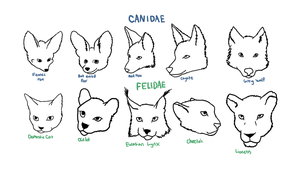 Canidae/Felidae Reference by thekoicat
