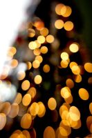 Golden Bokeh II by LDFranklin