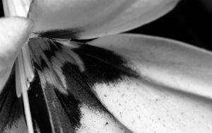 BW Flower - Entry 1 by floggerSG