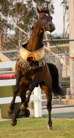 STOCK - Equitana 2013-353 by fillyrox