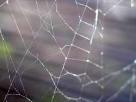 Spider Web by glawrence
