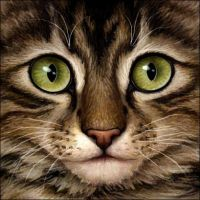 Brown Tabby Cat by Wynnyelle