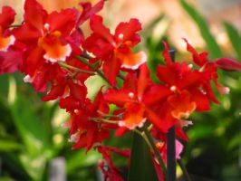 Red Cluster Love by Himmelmeere
