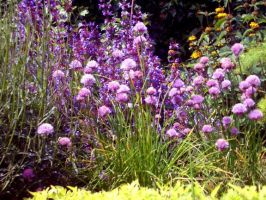 Chives i think? by csmgb