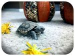 New Baby Turtle by ScarletRainXlll