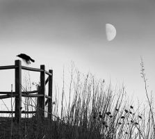 Crow and moon 2713 by filmwaster