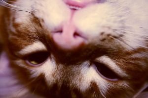 Upside Down Kitty by amandaWAY
