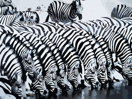 Vector Zebras by AryaInk