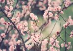 .:: Sweet Days ::. by Whimsical-Dreams