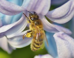 busy bees 2 6 by melrissbrook
