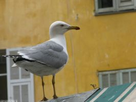 Seagull on the roof by Momotte2