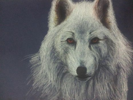 A Direwolf (Game Of Thrones) by DaphYin