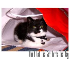 Dont Let The Cat Outta The Bag by Surf-Chick
