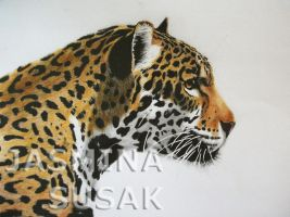 Jaguar-white background by JasminaSusak