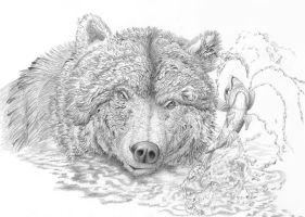 Salmon escapes from a bear by AldemButcher