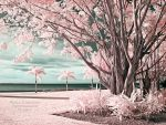 Infrared Trees by La-Vita-a-Bella