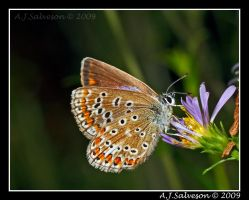 Butterfly  II by andy-j-s