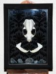 Mink Skull Shadowbox w/ Quartz Crystals by kittykat01