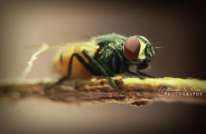 Portrait of a Bee by ahmedwkhan