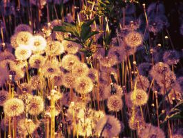 dandelion forest 2 by MissJane01