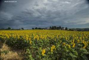 Sunflowers without Sun by Aneede