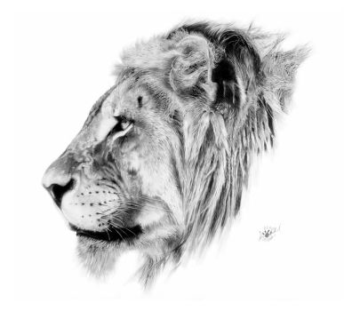 the king good pic by abearoriginal