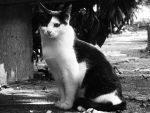 A Portrait Of A Cat by Photography-Dreamed