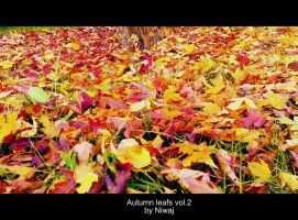 Autumn leafs vol.2 by niwaj