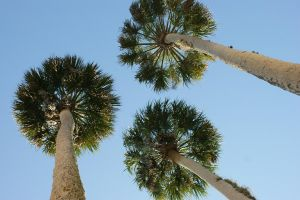 Palm Trees by OneOfLifesMysteries