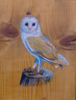 owl on wood by meeart