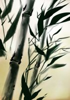 bamboo by Huanc