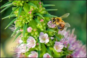 Bee Average by 1Elevin1