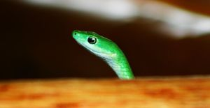 Green Mamba by xxx-ellie