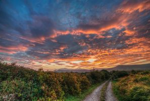 Blackberry Lane by cprmay