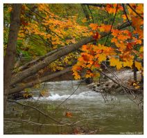 Color on the River II by mr-sarcastic1984