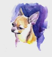 Chihuahua by RantGoil