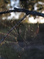 Sunlit Spiderweb by HempHat