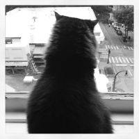 The Cat and the City 2 by wiebkefesch