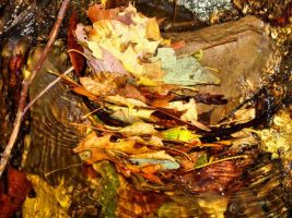 Leaves in the Water by stitch52481
