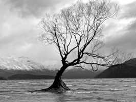 Tree on Lake Wanaka B+W by Lambophil