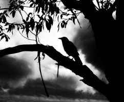 The crow. by Shutter-Bug1