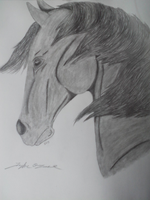 Pencil Horse 2 by TayMay135