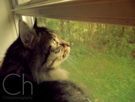 Bird Watching by Champineography